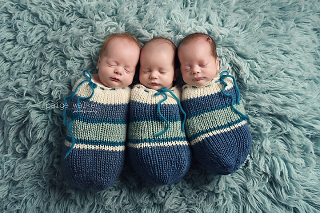 orphaned at birth triplets get surrogate mum the chronicle